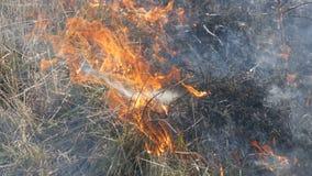 Vista di fuoco selvaggio pericoloso terribile di giorno nel campo Erba asciutta bruciante della paglia Un'ampia area della natura archivi video