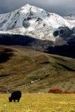 Vista di giorno dell'altopiano in Yala di Sichuan Cina fotografia stock libera da diritti