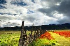 Vista di giorno dell'altopiano in Zhongdian Cina fotografie stock