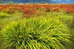 Vista di giorno dell'altopiano in Zhongdian Cina immagine stock