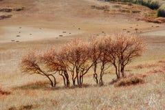 Vista di giorno della scena di autunno al Inner Mongolia fotografia stock