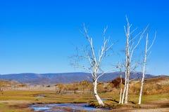 Vista di giorno della scena di autunno al Inner Mongolia fotografia stock libera da diritti