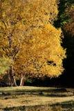 Vista di giorno della scena di autunno al Inner Mongolia Cina fotografia stock