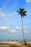 Vista di giorno della spiaggia della sabbia con l'albero di noce di cocco fotografia stock libera da diritti