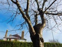 Vista di grande albero con il fondo europeo della casa Immagine Stock Libera da Diritti