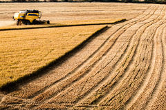 Vista di interurbana del raccolto del riso Fotografia Stock