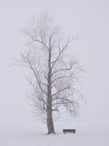 Vista di inverno Fotografia Stock