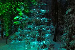 Vista di inverno: abete rosso nella foresta di notte decorata con la ghirlanda di Natale fotografia stock