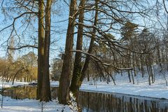 Vista di inverno, da Nicolae Romanescu Park Immagini Stock