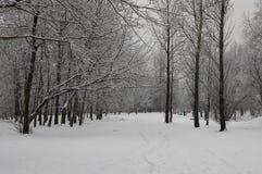 Vista di inverno della foresta Fotografie Stock Libere da Diritti