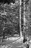 Vista di inverno della traccia appalachiana immagini stock libere da diritti