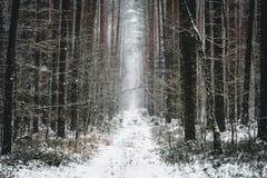 Vista di inverno della via della foresta Fotografia Stock Libera da Diritti