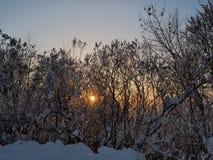 Vista di inverno durante il tramonto Fotografia Stock Libera da Diritti