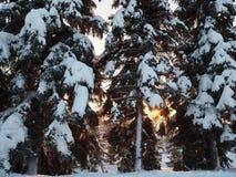 Vista di inverno durante il tramonto Immagine Stock Libera da Diritti