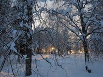 Vista di inverno durante il tramonto Fotografie Stock