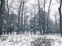 Vista di inverno di legni del parco di stato dello stagno della sbavatura Fotografie Stock Libere da Diritti