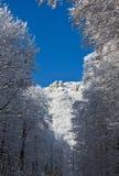 Vista di inverno sull'alta montagna attraverso gli alberi Fotografie Stock