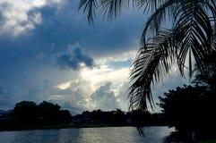 Vista di Lakeside delle palme e del tramonto ardente arancio Fotografia Stock Libera da Diritti