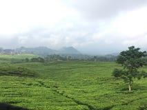 Vista di Lembang, giardino di tè Fotografia Stock Libera da Diritti
