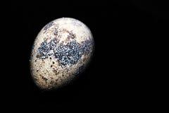 Vista di macro dell'uovo dell'uccello Fotografia Stock