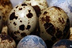 Vista di macro dell'uovo dell'uccello Fotografie Stock Libere da Diritti