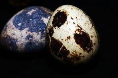 Vista di macro dell'uovo dell'uccello Immagine Stock Libera da Diritti