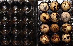 Vista di macro dell'uovo dell'uccello Fotografie Stock