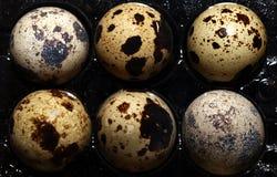 Vista di macro dell'uovo dell'uccello Immagini Stock