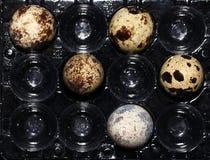 Vista di macro dell'uovo dell'uccello Fotografia Stock Libera da Diritti
