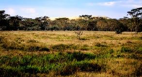 Vista di Mara masai Immagine Stock Libera da Diritti