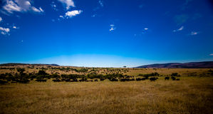 Vista di Mara masai Fotografia Stock Libera da Diritti