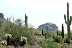 Vista di mattina del deserto in Arizona Immagini Stock Libere da Diritti