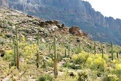 Vista di mattina delle montagne di superstizione in Arizona Immagine Stock Libera da Diritti