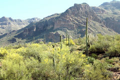 Vista di mattina delle montagne di superstizione in Arizona Immagini Stock Libere da Diritti