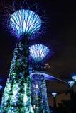 Vista di notte degli alberi eccellenti in giardino dalla baia Fotografie Stock