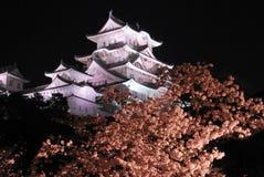 Vista di notte dei fiori di ciliegia al castello di Himeji Fotografia Stock Libera da Diritti