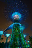 Vista di notte del boschetto di Supertree Immagine Stock Libera da Diritti