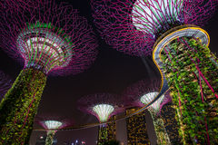 Vista di notte del boschetto di Supertree Fotografie Stock Libere da Diritti