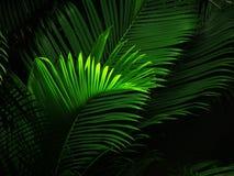 Vista di notte della palma Fotografia Stock Libera da Diritti