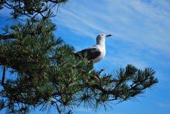 Vista di occhio dell'uccello Fotografie Stock