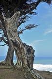 Vista di oceano Fotografie Stock Libere da Diritti