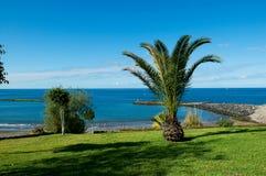 Vista di oceano con la palma Immagine Stock Libera da Diritti