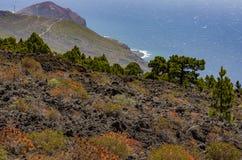 Vista di oceano nel sud di La Palma con la pianta nella priorità alta Fotografie Stock