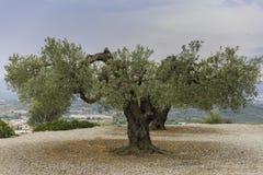 Vista di di olivo fotografia stock