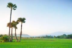 Vista di paesaggio del giacimento del riso in Chiangmai Tailandia Immagine Stock Libera da Diritti