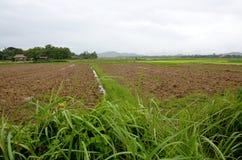 Vista di paesaggio di risaia a Nan, Tailandia Fotografia Stock Libera da Diritti