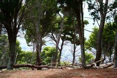Vista di Palermo Fotografia Stock Libera da Diritti