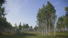 Vista di panorama degli alberi che crescono sulla radura situata al bordo della foresta video d archivio
