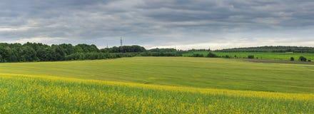 Vista di panorama del campo verde e giallo con la foresta dietro Fotografie Stock