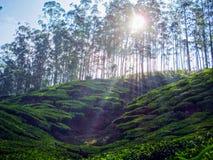 Vista di panorama del paesaggio del campo sulla montagna Fotografia Stock Libera da Diritti